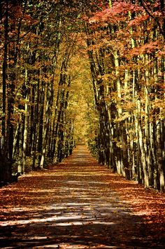 Covered Road- The road to the small town of Freda in the Upper Peninsula of Michigan