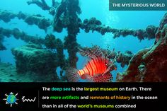 #ocean #exploration #facts
