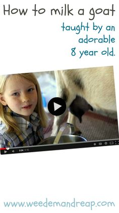 How to Milk a Goat, taught by an adorable 8-year-old! #video #goats #farming