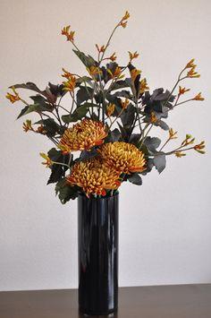 Physocarpus opulifolius Diabolo - New Images
