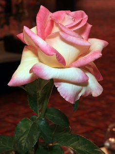 Cajun Sunrise Rose : @ Don Beautiful Rose Flowers, All Flowers, Exotic Flowers, Amazing Flowers, Lavender Roses, Pink Roses, Rosa Rose, Hybrid Tea Roses, Flower Wallpaper