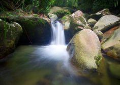 Australia - Queensland - Daintree National Park - Rainforest