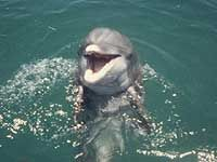 Shell Island Shuttle - Panama City Beach Florida Attractions