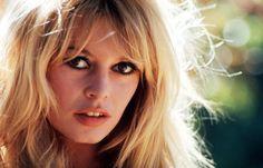 Gallery of Brigitte Bardot   Brigitte Bardot