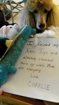 I already found my Christmas toys last nite and chewed them up while Mom was sleeping.  Love Charlie!