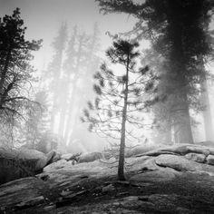 "Saatchi Art Artist SILVERFINEART - Gerald Berghammer - Ina Forstinger; Photography, ""Ldt. Edition 2/20 - Into the Wild, CA, USA 2015"" #art Ca Usa, Saatchi Art, Artist, Photography, Fotografie, Artists, Photography Business, Photo Shoot, Fotografia"