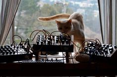 Cat, Pittsburgh Modular and Teenage Engineering
