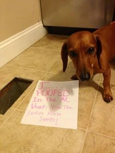 15 Absolutely Hilarious Dogshaming Signs - Oddee.com