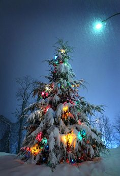 Outdoor Christmas tree with lights in snow -