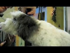 Part 1 Grooming the Matted & Fear Aggressive dog - Health Focus Part 1 of 2 - YouTube