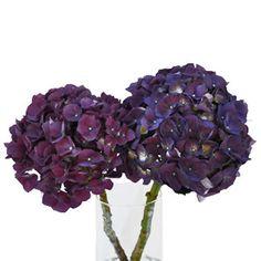 FiftyFlowers.com - Hydrangea PurpleBerry Flower