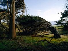 Windswept Trees of Slope Point