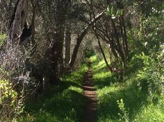 A hike that a hidden gem in the Adelaide Hills close to Adelaide. The circuit trail is return, 2 hours. Sngle track, fire tracks, some steep trail sections. Conservation, Maine, Things To Do, Trail, Hiking, Country Roads, Park, Places, Things To Make