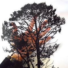 Hand-cut paper silhouette of a pine from Maine, Papercut by Joe Bagley