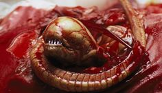 Celebrate 35 Years of Ridley Scott's Alien with Trivia and Prints | 30 Second Cinema