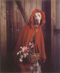 """William Wegman- """"Grandmother,"""" she said, """"you look…"""" from Little Red Riding Hood suite William Wegman, Funny Dogs, Funny Animals, Baby Animals, Weimaraner, Red Riding Hood, Dog Photos, Mans Best Friend, Puppy Love"""