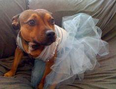 Gertie Ballerina!