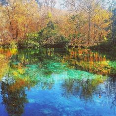 Nature wows us with all her colourful beauty! This photo by @michellembarboza . Our #ladiesinstem were recently showing us #colour for the Instagram challenge. . #Repost @michellembarboza  Day 18 of @thestemsquad photo challenge is #color so I present to you a photo from my first visit to a natural Florida spring (in Fall no less!). . Fact for today: Florida has more natural springs than any other state. Why? Geology  weather  . Much of Florida's subsurface is porous marine limestone which…