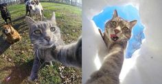 Say hello to Manny — a precocious feline who has mastered the fine art of the selfie and is now stealing hearts across the Internet.