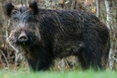 FIRENZE – La Regione si metterà al lavoro per predisporre una legge obiettivo specifica sulla gestione degli ungulati selvatici. Caprioli, cinghiali,...