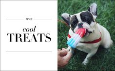 One great way to help keep your dog cool is to offer them ice cubes to crunch on. But while ice cubes certainly do the trick, there are tastier options available. And Violet, the gourmand she is, is unlikely to settle for ice cubes when she sees us having Popsicles. So we make dog-friendly frozen treats for her. The recipes are easy to find and easy to follow. And when it's 35 degrees out, easy solutions are the best kind.