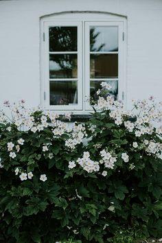 North Garden, Simple Aesthetic, Cottage Gardens, Deep Thoughts, Garden Inspiration, Exterior Design, Outdoor Spaces, Red Roses, Facade