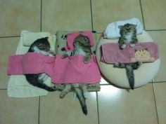 Aw, it looks like napping after a bath, poor tuckered out kitties.