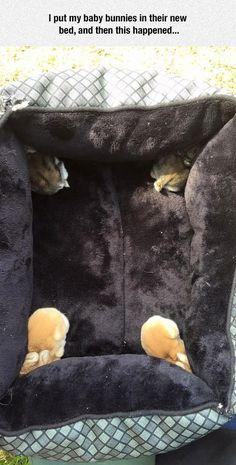 Baby bunnies...