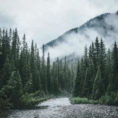 Somewhere in Banff. Missing these lush canadian woods..