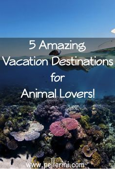 5 Amazing Vacation Destinations for Animal  Lovers!  If you're an animal lover then you need to check out these 5 vacation spots that are perfect for you!