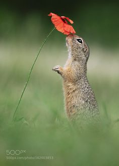 Squirrel & Poppy by Julian_Rad #animals #animal #pet #pets #animales #animallovers #photooftheday #amazing #picoftheday