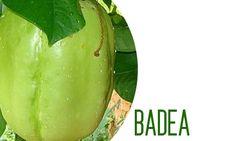 Evita la depresión tomando jugo de badea: En Colombia se cultiva en el Chocó. Similar en forma y color a la sandía pero con una pulpa esponjosa y de sabor dulce, se utiliza en la preparación de jugos, dulces, jaleas y tortas. En Ecuador, su extracto no falta en el menú, incluso, en algunas ocasiones, se le agrega canela y vino. Honeydew, Cantaloupe, Exotic Fruit, Pear, Watermelon, Blueberry, Pineapple, Strawberry, Ecuador