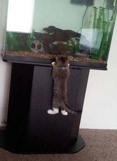 TOP 10: Gatos robando