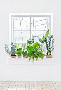 Cultiver des plantes pour rebord de fenêtre permet de donner vie à l'espace et fait entrer le bonheur dans l'habitation. Et comme tout citadin a besoin d'au moins un petit coin de verdure pour pallier la grisaille de la ville, on profite de chaque centimètre carré qui s'offre à nous. #plants #windows #interior
