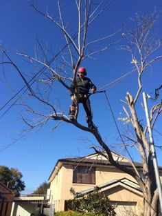 Our business is fully insured to back up the quality and efficiency of our and have customers confident in getting complete satisfaction. For more details please call Ben's Tree and Garden Services at : 0439 413