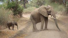 JARDINS MARAVILHOSOS....: A natureza pura e linda de Moçambique; África...
