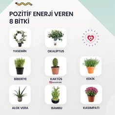 Healthy Lifestyle Motivation, Study Motivation, Aloe Vera, Good To Know, Life Is Good, Herbalism, Life Hacks, Planter Pots, Nutrition