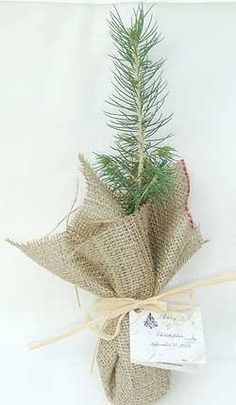 Wedding Favors - Give out baby trees that are local to the area, and give them to the forestry service to replace trees wiped out by wild fires