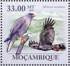 Dark Chanting Goshawk stamps - mainly images - gallery format
