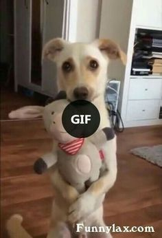 When they got you perfect gift - animals & pets,cute dogs,friendly animals,gifts,stuffed animals Funny Cat Pictures, Funny Images, Animal Pictures, Funny Dogs, Cute Dogs, Funny Animals, Funny Humor, Awesome Dogs, Big Dogs