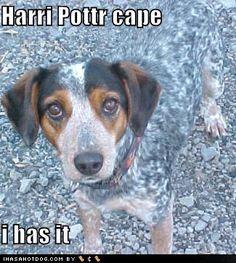 harry potter cape i haz it