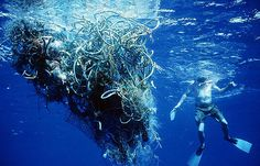 Ocean pollution is becoming a bigger problem each year. When trash gets in the ocean it usually ends up in one of the gyres. This is where fish and birds ingest plastic and garbage. The world's biggest trash pile currently is in the North Pacific Ocean. There is 250,000 thousand square miles of floating and submerged trash. This has created all forms of life in the area.