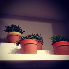 Easy DIY idea for pots, love that the stripe doesn't cover entire lip- via @Jonathan Lo / happymundane on Instagram