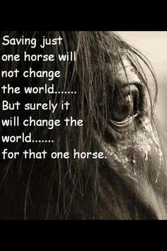 Change one life for that horse <3