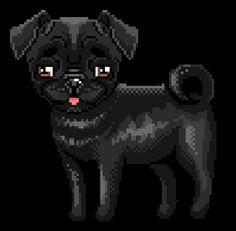drew lil pug♥