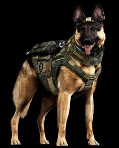 Call of Duty Dog: breakout actor of the year