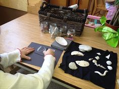 Passionately Curious: Learning in a Reggio Inspired Kindergarten Environment: Setting the Stage