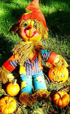 Scarecrow in a Pumpkin patch