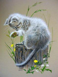 Sue Warner - Peintre et Dessinatrice Animalière - Gouache - Chaton sur une souche d'arbre