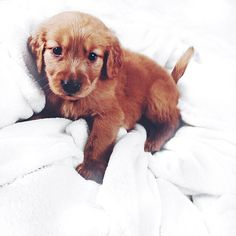 tumblr is filled with puppies rn & im not mad by meghanrienks